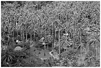 Resort and palm trees from above, Railay. Krabi Province, Thailand (black and white)