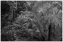 Jungle vegetation, Laem Phra Nang, Rai Leh. Krabi Province, Thailand (black and white)