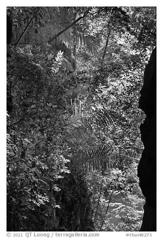 Jungle above Sa Phra Nang, Railay. Krabi Province, Thailand (black and white)