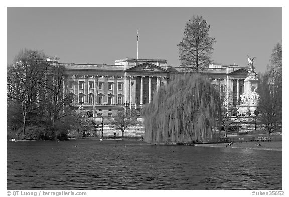 Buckingham Palace and lake, Weeping Willow (salix babylonica),  Saint James Park. London, England, United Kingdom (black and white)