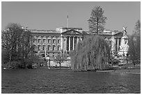 Buckingham Palace and lake, Weeping Willow (salix babylonica),  Saint James Park. London, England, United Kingdom ( black and white)