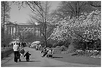 Pathway in Saint James Park in spring with Buckingham Palace in the background. London, England, United Kingdom ( black and white)