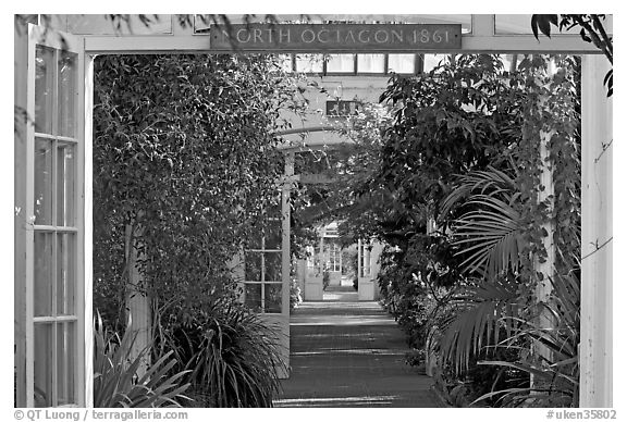 Long central path in the Temperate House. Kew Royal Botanical Gardens,  London, England, United Kingdom (black and white)