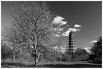 Great Pagoda and tree in bloom. Kew Royal Botanical Gardens,  London, England, United Kingdom (black and white)