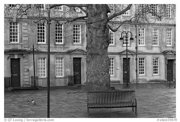 Blue metal bench and tree, Kingsmead Square. Bath, Somerset, England, United Kingdom (black and white)