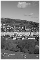 Sheep and distant view of town. Bath, Somerset, England, United Kingdom ( black and white)