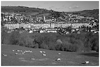 Sheep on hill, with town below. Bath, Somerset, England, United Kingdom ( black and white)