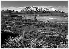 Tundra and snowy mountains. Alaska, USA ( black and white)