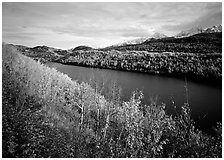 Long Lake surrounded by aspens in autumn color. Alaska, USA ( black and white)