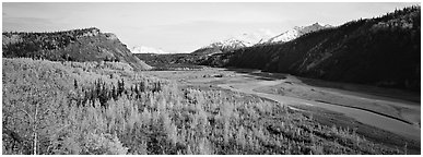Wide valley with aspen in autumn colors. Alaska, USA (Panoramic black and white)