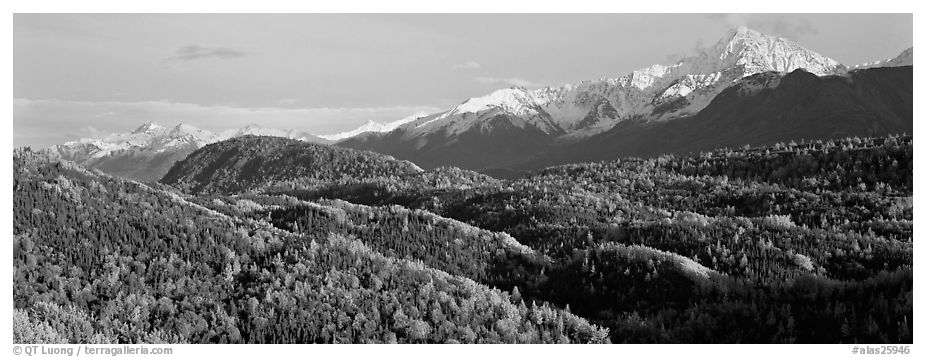 Fall mountain landscape with aspens and snowy peaks. Alaska, USA (black and white)