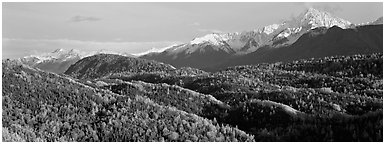 Fall mountain landscape with aspens and snowy peaks. Alaska, USA (Panoramic black and white)