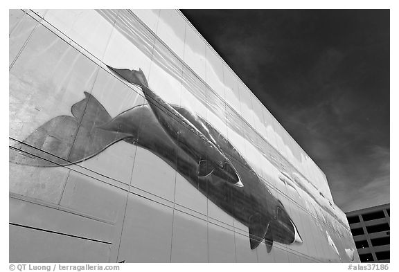 Outdoor wall mural with whale. Anchorage, Alaska, USA (black and white)