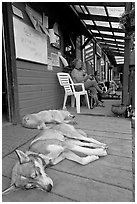 Dogs laying on porch of lodge. McCarthy, Alaska, USA ( black and white)