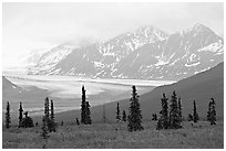 Spruce trees,  glacier and Chugatch mountains in background. Alaska, USA (black and white)