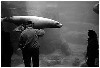 Tourists standing next to the northern sea lion aquarium, Alaska Sealife center. Seward, Alaska, USA ( black and white)