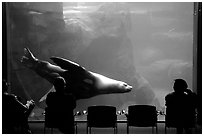 Tourists sitting next to the northern sea lion aquarium, Alaska Sealife center. Seward, Alaska, USA ( black and white)