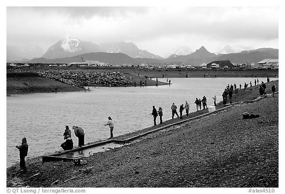 The Fishing Hole. Homer, Alaska, USA (black and white)