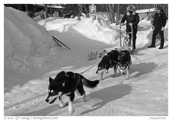 Dog mushing from parking lot. Wiseman, Alaska, USA (black and white)