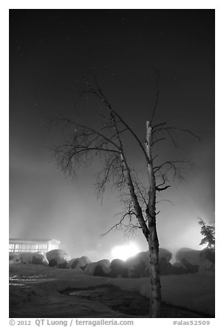 Tree, thermal steam, bathhouse, and stars. Chena Hot Springs, Alaska, USA (black and white)