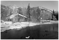 Cabins with swans and ducks in winter. Chena Hot Springs, Alaska, USA ( black and white)