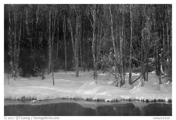 Stream and forest in winter. Chena Hot Springs, Alaska, USA (black and white)