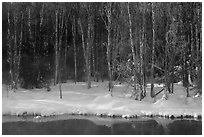 Stream and forest in winter. Chena Hot Springs, Alaska, USA ( black and white)