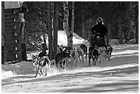 Dog mushing. Chena Hot Springs, Alaska, USA (black and white)