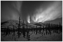 Aurora Borealis illuminating winter sky and forest. Alaska, USA (black and white)