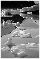 Floating ice and mountain reflections, Portage Lake. Alaska, USA ( black and white)