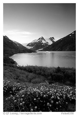 Wildflowers and Portage Lake at dusk. Alaska, USA (black and white)