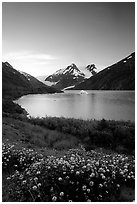 Wildflowers and Portage Lake at dusk. Alaska, USA ( black and white)