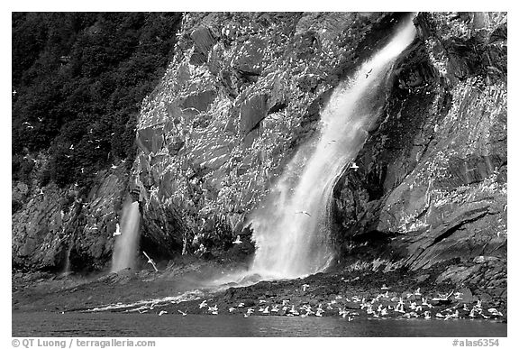 Waterfall and Seabirds. Prince William Sound, Alaska, USA (black and white)