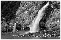Waterfall and Seabirds. Prince William Sound, Alaska, USA ( black and white)