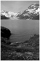 Lupine, mountains, and glaciers across Harriman Fjord. Prince William Sound, Alaska, USA ( black and white)