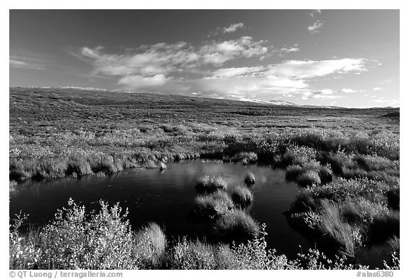 Tundra in autum colors and pond. Alaska, USA (black and white)