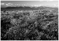 Tundra and mountains at sunset. Alaska, USA (black and white)