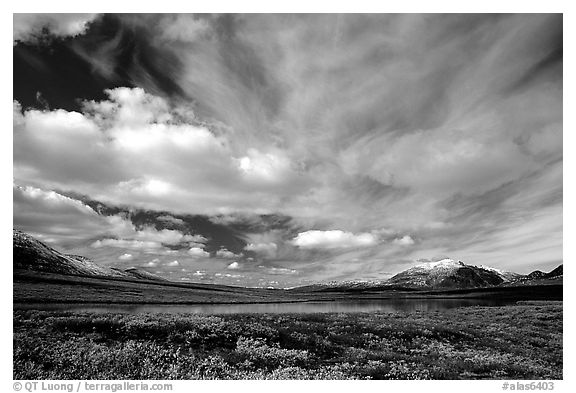 Tundra in fall color, lake, and sky dominated by large clouds. Alaska, USA (black and white)