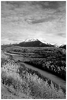 Autumn Aspens and Chugach range, late afternoon. Alaska, USA ( black and white)