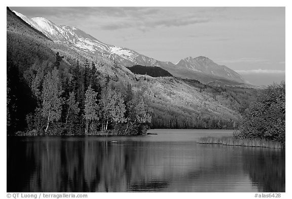 Long Lake with Autum Aspens, late afternoon. Alaska, USA (black and white)