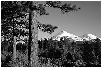 Pines and Mt Shasta seen from the North, late afteroon. California, USA ( black and white)