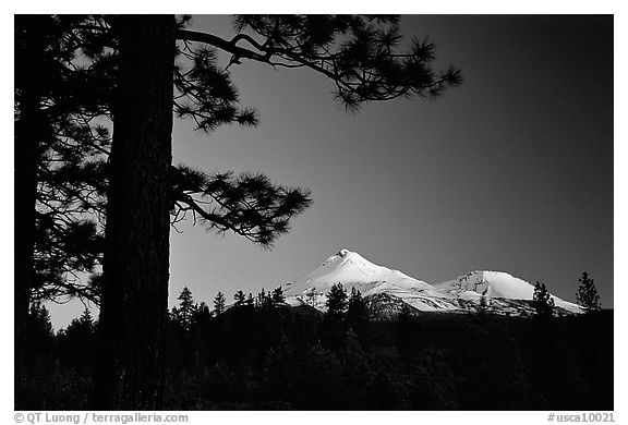 Pines and Mt Shasta seen from the North, sunset. California, USA (black and white)