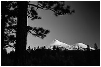 Pines and Mt Shasta seen from the North, sunset. California, USA ( black and white)