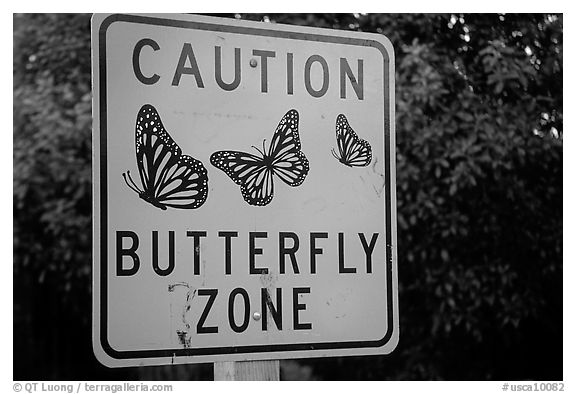 Monarch Butterfly sign. Pacific Grove, California, USA (black and white)