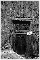 Entrance of the World Famous Tree House, near Leggett. California, USA ( black and white)