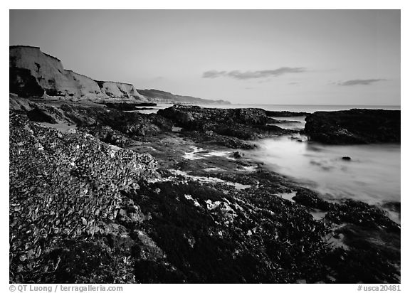 Mussel-covered rocks, seaweed and cliffs, sunset. Point Reyes National Seashore, California, USA (black and white)