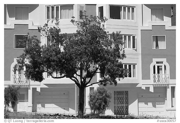 Tree and colorful house. San Francisco, California, USA (black and white)