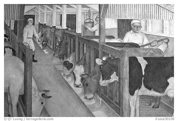 Cows in a farm depicted in a fresco inside Coit Tower. San Francisco, California, USA (black and white)