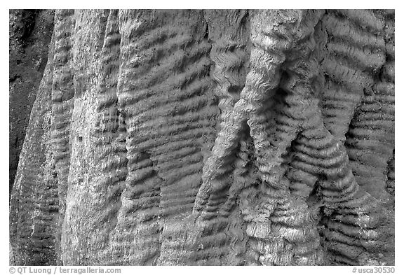 Bark texture of a redwood tree. Big Basin Redwoods State Park,  California, USA (black and white)