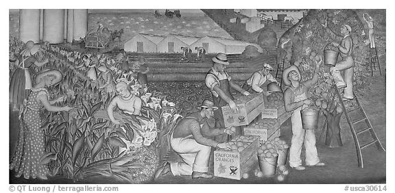 Orange-harvesting  scene depicted in a fresco inside Coit Tower. San Francisco, California, USA (black and white)